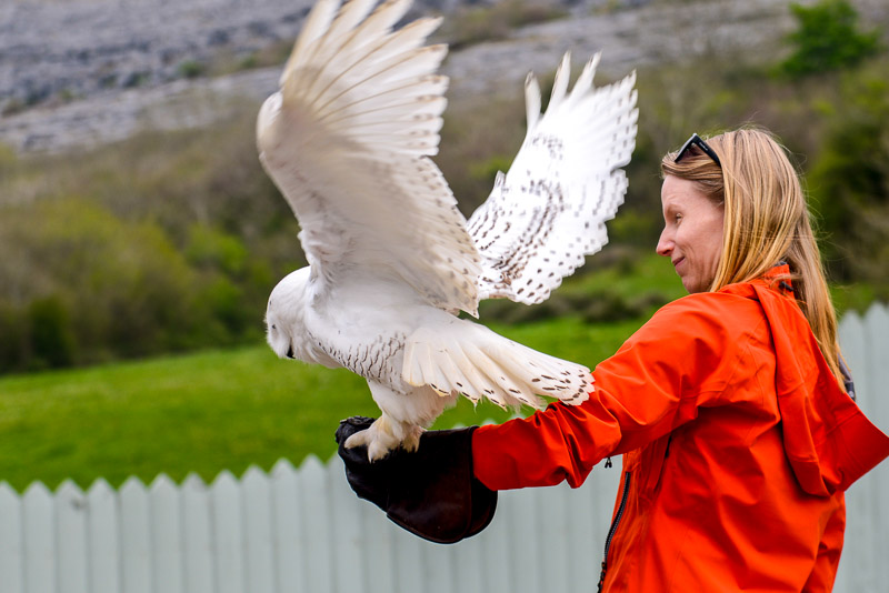 Bird of Prey Center, Ailwee Cave, Ballyvaughab, County Clare, Ireland