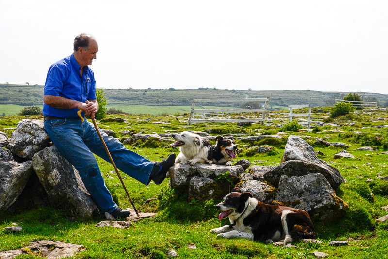 Caherconnell Fort (John Gavin) and sheep dog handeling demonstrations, Carron, County Clare, Ireland