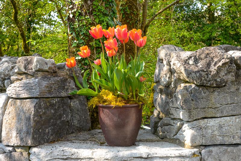 The Burren Perfumery and Herb Gardens, Carran, The Burren, County Clare, Ireland