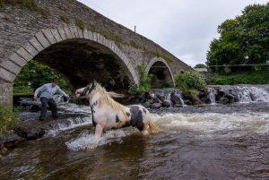 Washing the pony, Clohammon, County Wexford, Ireland