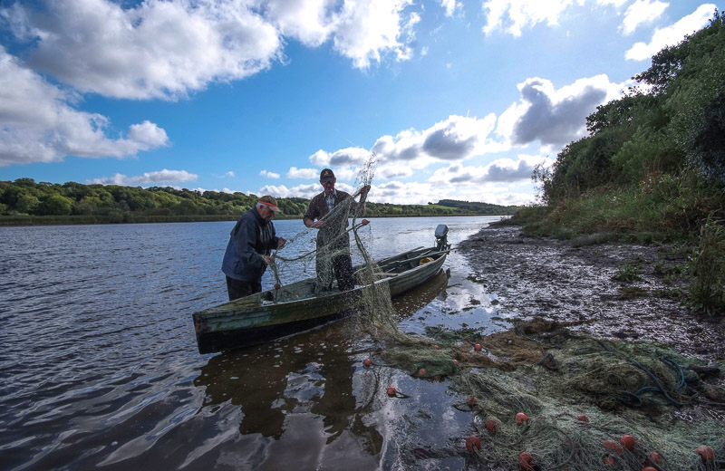 Setting the salmon nets, River Slaney, County Wexford, Ireland