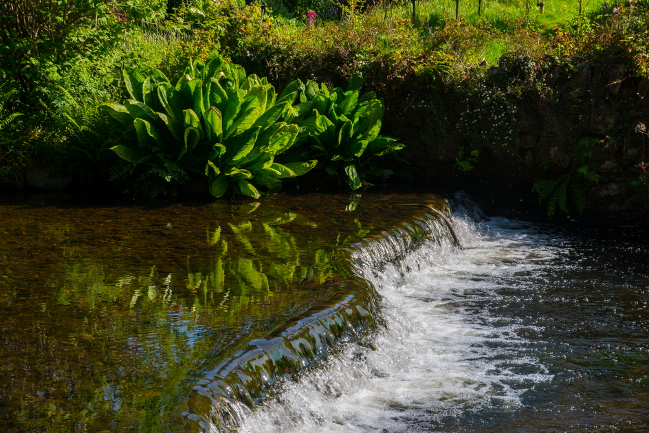 Mount Usher Gardens, Co Wicklow, Ireland