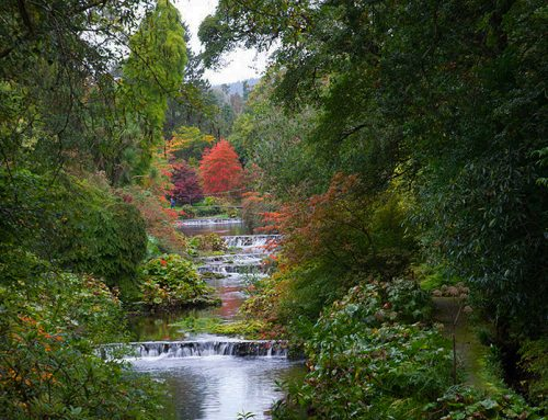 Mount Usher Gardens; an autumn spectacular