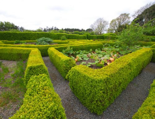 Kilmokea Country Manor & Gardens; wander through lush woodland with a colourful, peaceful atmosphere