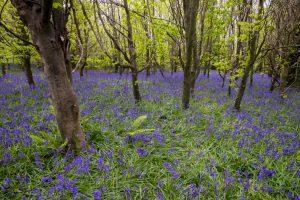 Woods at Tintern Abbey, Saltmills, Co Wexford, Ireland. &copy John Ironside