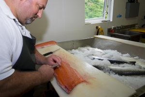 Filleting Wild Irish Salmon at Ballyhack Smokehouse, Arthurstown, Co Wexford, Ireland