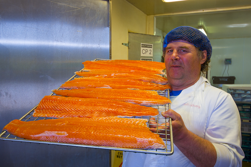 Salmon sides heading for the smoke house, Ballyhack Smokehouse, Arthurstown, Co Wexford, Ireland. &copy John Ironside