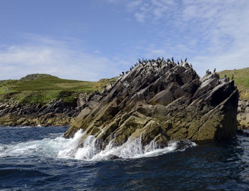 The Saltee Islands; Pirates, Smugglers, and now amazing wildlife