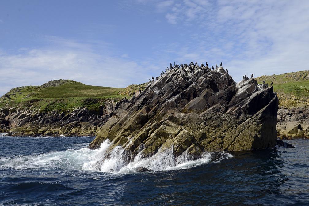 Saltee Island off Kilmore Quay, Co Wexford, Ireland. &copy John Ironside