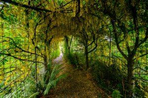 Coolaught Gardens and Garden Center, Clonroche, Enniscorthy, County Wexford, Ireland. &copy John Ironside
