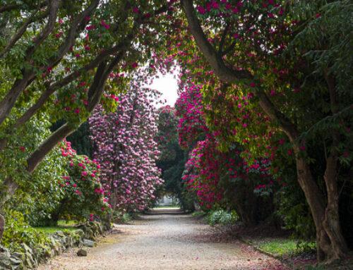 National Botanic Garden – Kilmacurragh, Ireland