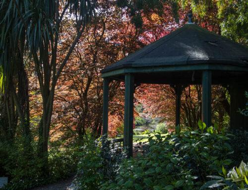 Mount Usher Garden