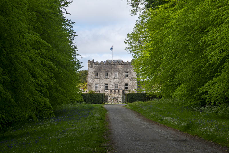 French Lime Trees line Avenue. Established in 1690. Huntington Castle and Garden, Clonegal, ounty Carlow, Ireland.